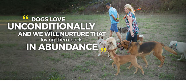 Notes from a dog walker : they just want to have fun.