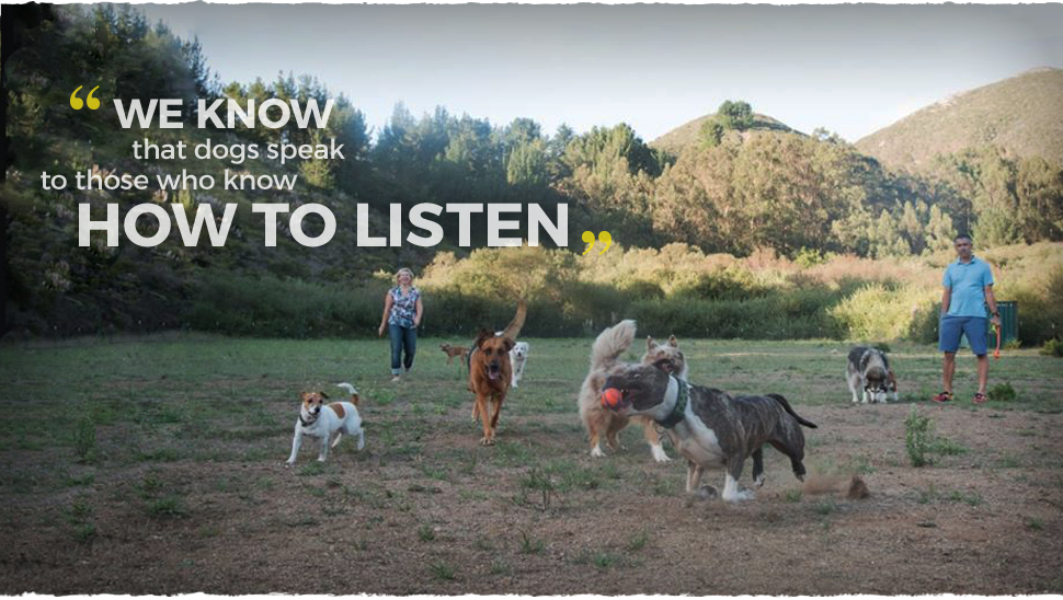 Most dog walking services keep your dog on a leash.  We let them run free.