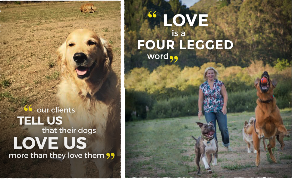 Our clients tell us that their dogs love us more than they love them